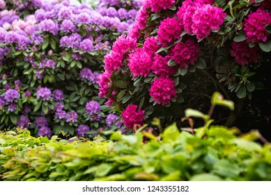 City Park, Grosser Garten in Dresden, Dresden, Saxony, rhododendrons, flowering bushes, flowers, red rhododendrons