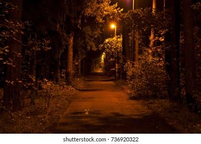 City park illuminated at golden autumn night
