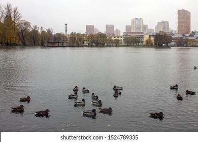 City Park with pond autumn rainy day