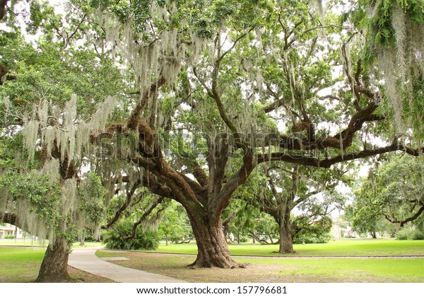 City Park Trees in New Orleans