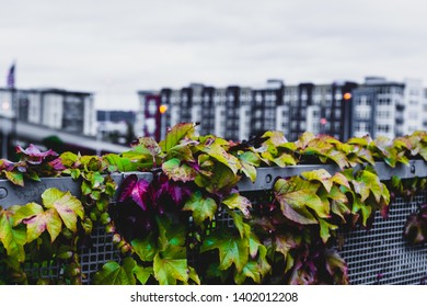 City plants with buildings in the distance in daylight