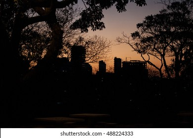 City skyline during sunset with silhouette of trees and buildings