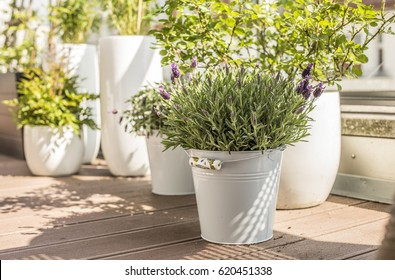 City terrace in spring, balcony plants