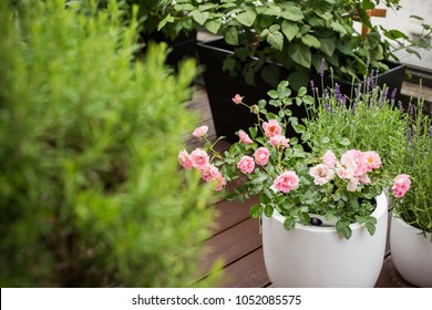 City terrace in summer, balcony plants