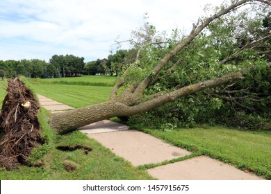 City tree knocked down by a storm laying over a sidewalk