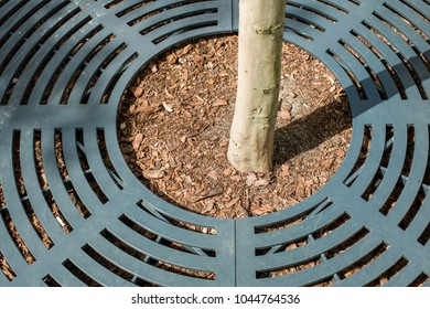 city tree stem protected by round shape metallic frame