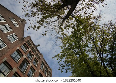 City View From Underneath With Old Typical Brown Houses And Big Trees, Amsterdam, Historical Highlights Of Netherlands.
