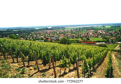 City View and vines on steep hillside in the famous Tokaj wine region, Hungary