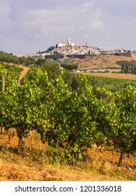 Cityscape of Estremoz, the White City in Alentejo region, Portugal. Vines in the foregrund.