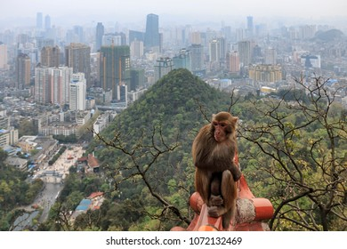 Cityscape of Guiyang at noon, Guizhou Province, China with monkey on foreground.