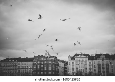 Cityscape of Prague with buildings under cloudy sky. Some seagulls flying on the sky. Prague is the capital town of Czech Republic and is a famous travel destination. Black and white photo