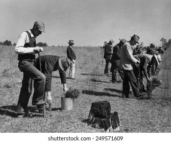 Civilian Conservation Corps planting trees, ca. 1935. Some wear worn hats and suit jackets, indicating their previous employment.