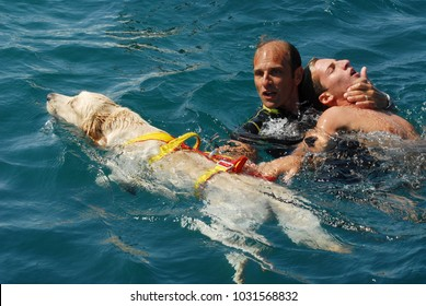 CIVITAVECCHIA, Italy - august 05, 2007: RESCUE DOGS ON BOARD WITH ITALIAN COAST GUARD. Labrador and Terranova dive from the Coast Guard patrol boats in high seas. demonstration of Italian school