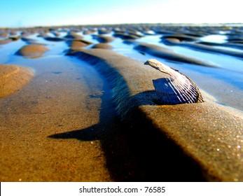 A Clam casting a shadow  on a tropical sandbar.