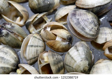 Clam is a common name for several kinds of bivalve molluscs.