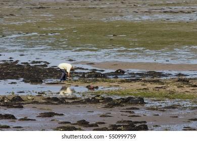 Clam searcher on Il de Re shoreline