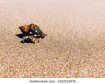 A clam in a shell creeps along the beach. Beach concept with copy space.