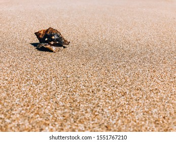 A clam in a shell creeps along a yellow sandy beach.