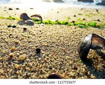 A clam shell on a beach sand