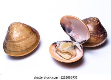 clam shell raw fresh seafood on plate isolated on white background