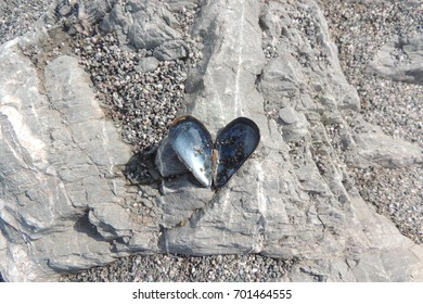 Clam shells opened to form a heart shape, on the beach at Portwrinkle, Cornwall