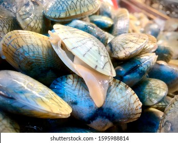 Clams. Opened shellfish. Fresh shellfishes.