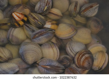 Clams for Seafood