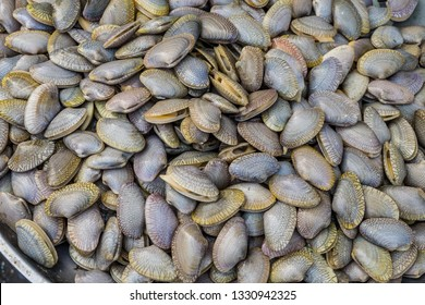 Clams,Surf clam, Short necked clam, Carpet clam, Venus shell, Baby clam,Thai clams for background