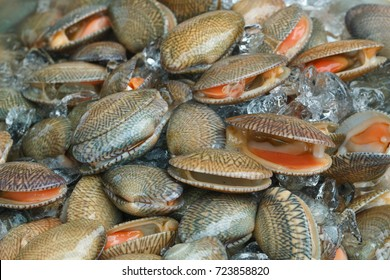 Clams,Surf clam, Short necked clam, Carpet clam, Venus shell, Baby clam,Thai clams