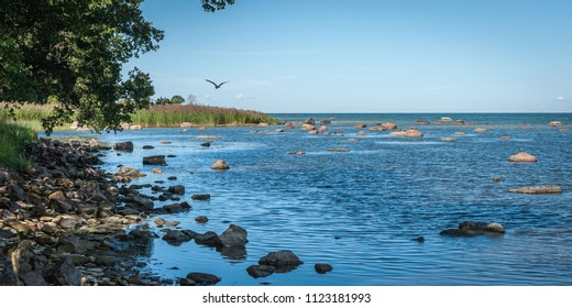 Classic Baltic landscape. Wild beach of the Baltic sea in summer. The Gulf of Finland, Estonia. Flying bird.