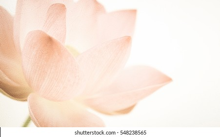 classic color lotus in soft style on mulberry paper texture for background