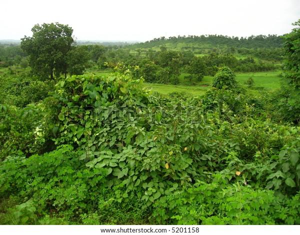 Classic Green Landscape