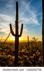A classic icon of the American southwest, a saguaro cacti silhouetted against a blue and yellow sunset sky filled with wispy white clouds. A vertical background of the Sonoran desert landscape. 2018