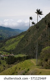 Classic landscape of the Cocora Valley in Colombia