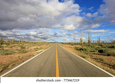 Classic panorama view of an endless straight road running through a Large Elephant Cardon cactus landscape in Baja California, Mexico