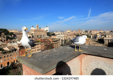 Classic Rome - Seagulls at top , aerial view to old roof buildings and street