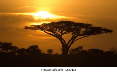 Classic Sunrise in Serengeti National Park