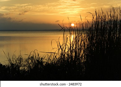 A classic sunset with silhouetted grasses in the foreground.  Lake Apopka, Florida.