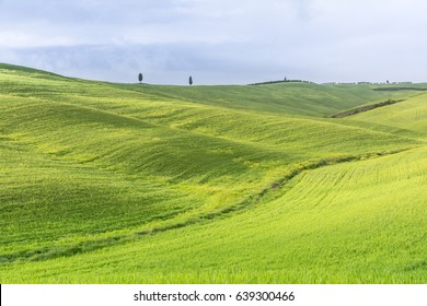 classic Tuscany landscape with hills,cipress and field during a sunny day.