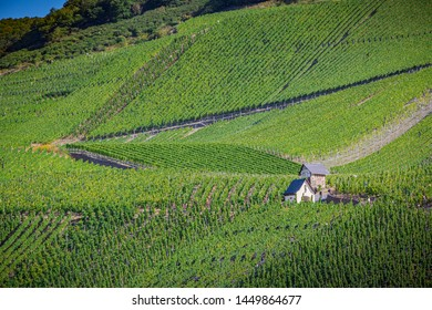 Classic vineyard house surrounded by thousands of grape vines ne