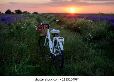Classical bicycle in a lavender field at the sunset