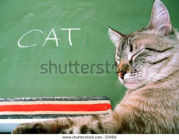 Classroom chalkboard with the word cat, a cat sitting next to the board.