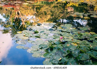 Claude Monet the garden in autumn, water lilies in the lake on a Sunny day
