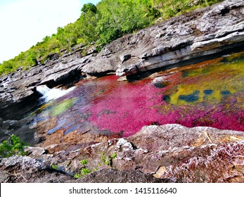 Clavulatum algae river (Caño Cristales, Colombia)- Funny Mickey´s ears formed on the rocks.