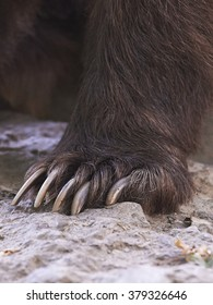 Claws of a brown bear
