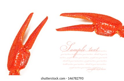 Claws crayfish closeup. isolated on white background