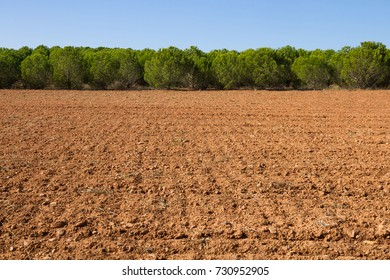 Clay agricultural land recently plowed and surrounded by a pine plantation