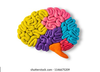 Clay model of brain anatomy on white background