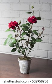 Clay pot with rose.