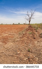 Clay soil cassava plantation agriculture and farming in Asia